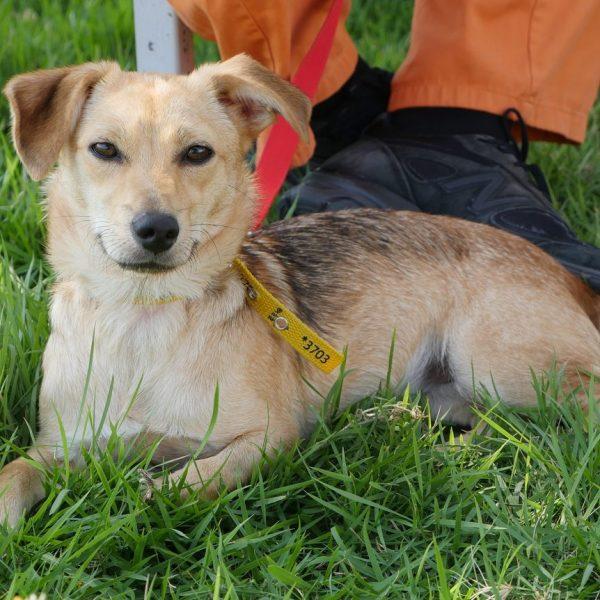 לילי הקטנה שלנו, כלבה בלונדינית שמחפשת קשר ומגע עם אנשים, מחכה לגם בכלא חרמון