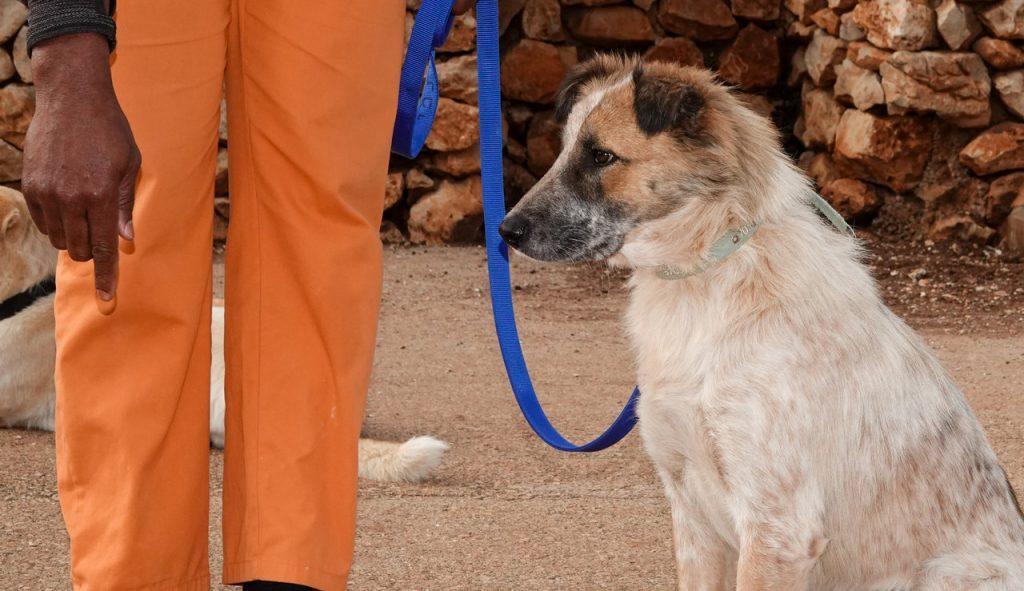 תמונת פרופיל של כלב בינוני בכל פרווה ארוכה בהירה בצבעים חום בהיר ולבן לצד דמות לבושה במכנסיים כתומים עם רצועה כחולה.