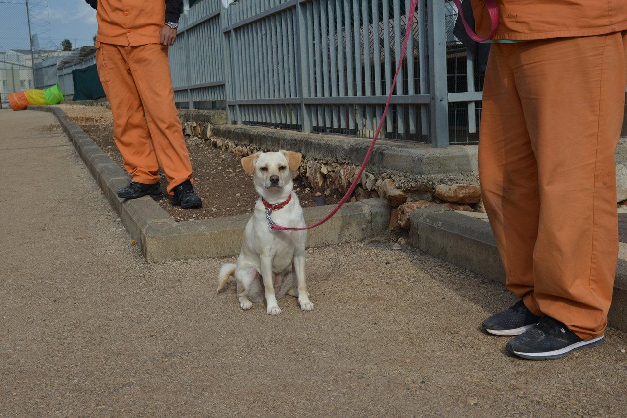 לוסי כלבה קטנה, בהירה עם קולר אדום יושבת על הרצפה