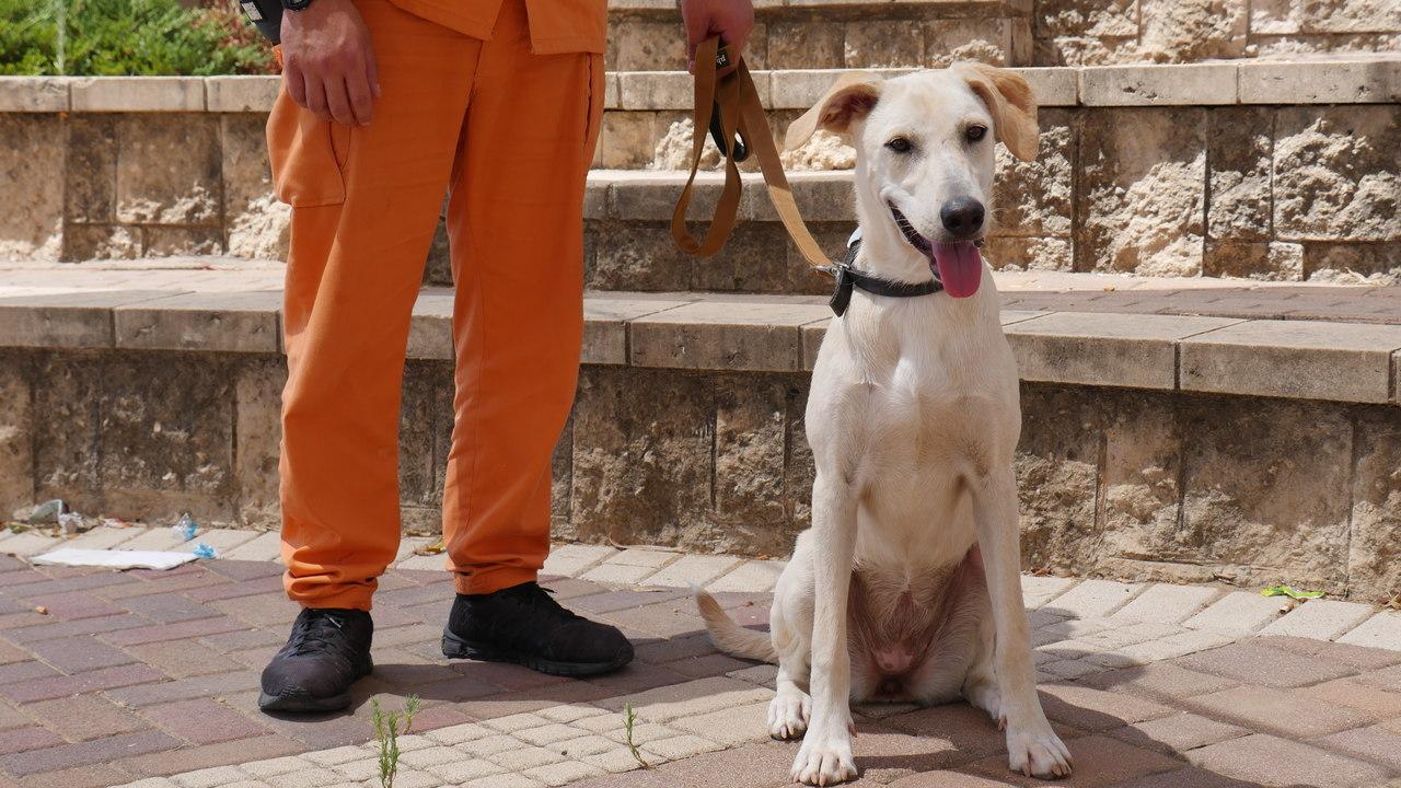 כלבה בינונית ועדינה בת כשמונה חודשים. זקוקה למשפחה שתתן לה תחושת ביטחון והרבה אהבה.